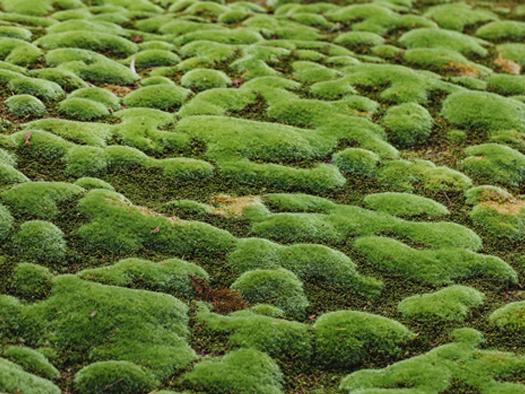 moss01.jpg